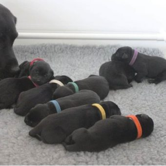 Puppies with ID Band Washable Collar