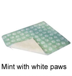 MINT-WITH-WHITE-PAWS-340×340 jpg