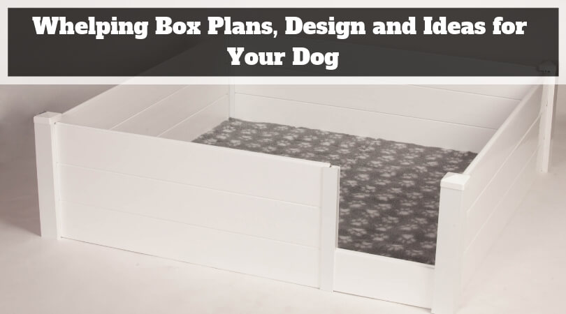 Whelping Box Plans, Design and Ideas for Your Dog
