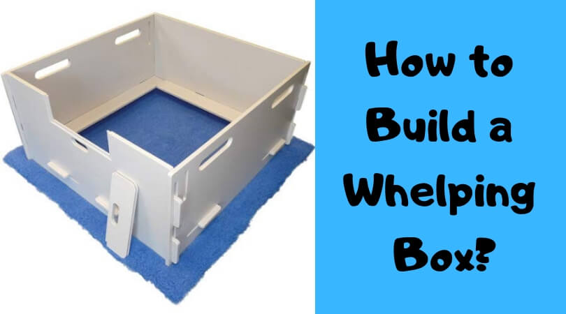 How to Build a Whelping box?