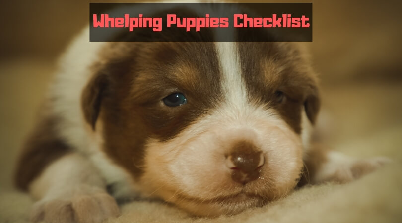 Whelping Puppies Checklist