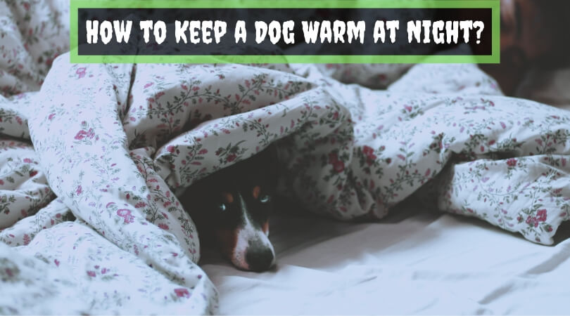 How to Keep a Dog Warm at Night_