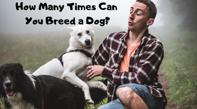 How Many Times Can You Breed a Dog_