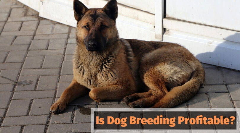 Is Dog Breeding Profitable?
