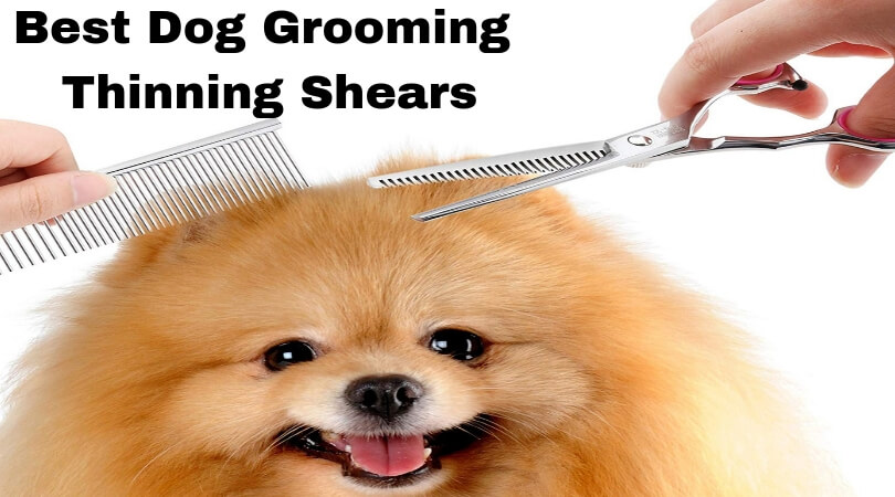 Best Dog Grooming Thinning Shears