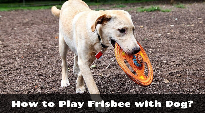 How to Play Frisbee with Dog