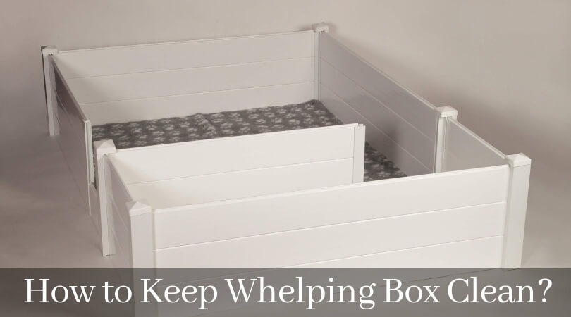 How to Keep Whelping Box Clean_